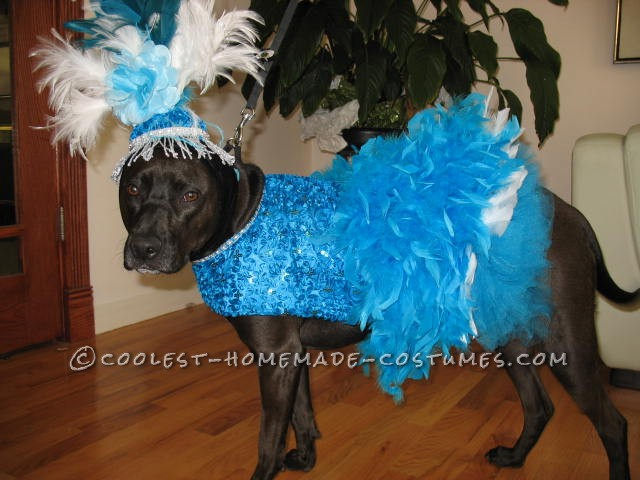 Copacabana Showgirl Costume for a Dog