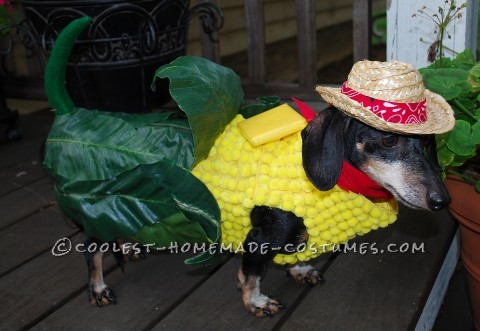 Corn on the Cob Costume for a Miniature Dachshund