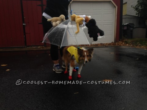 Raining Cats and Dogs Costume for a Dog