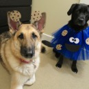 Deliciously Adorable Cookie Monster Costumes for Dogs