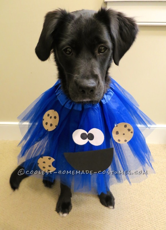 Deliciously Adorable Cookie Monster Costumes for Dogs - 2