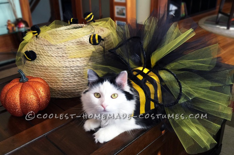 Homemade Bumble Bee Cat Costume - 1