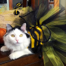 Homemade Bumble Bee Cat Costume