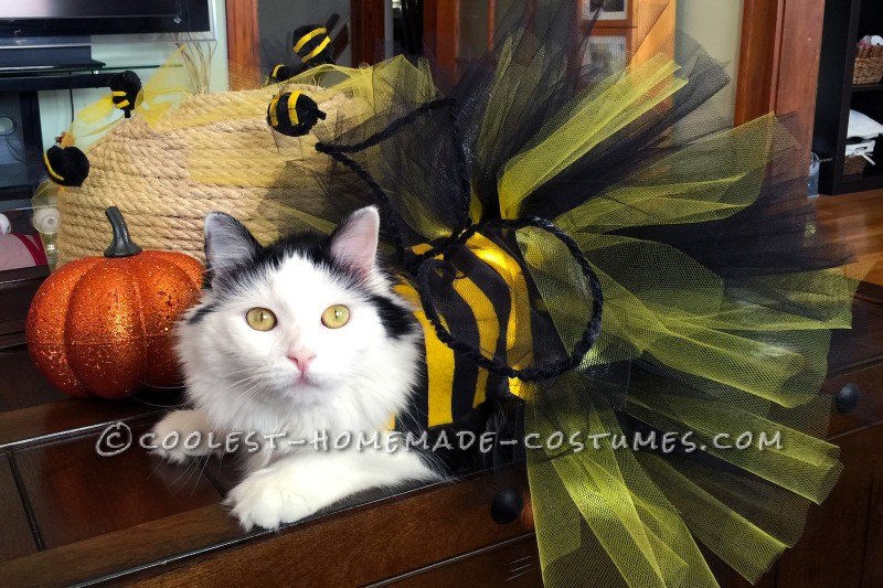 Homemade Bumble Bee Cat Costume