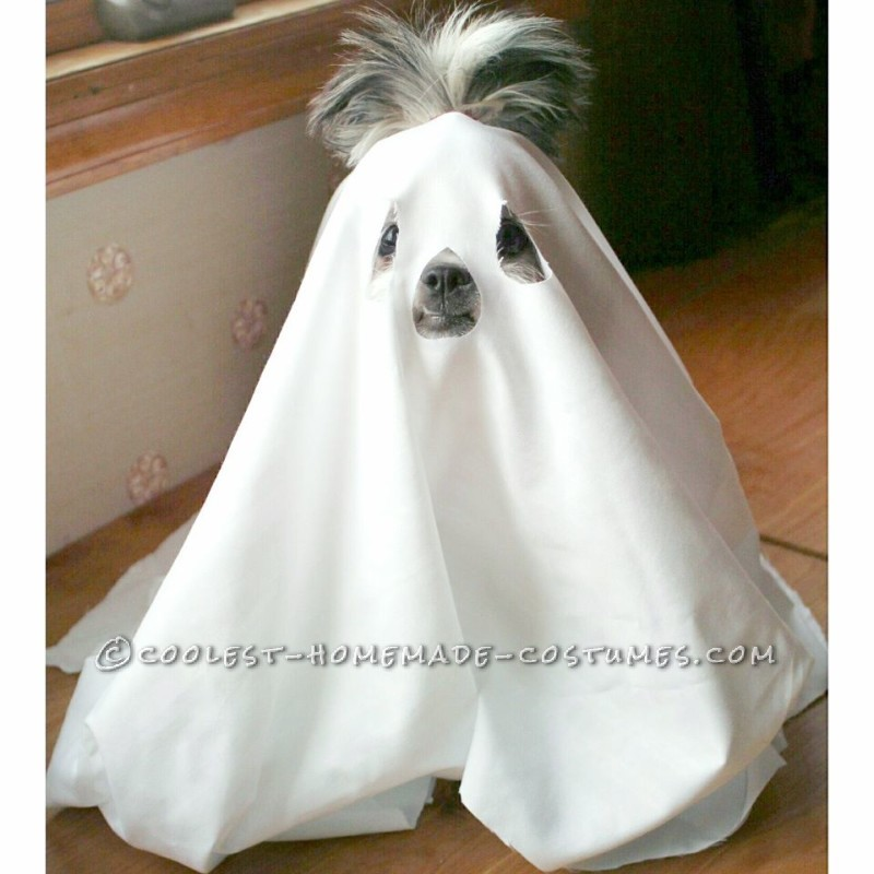 Scary Little ShitzBoo Dog Costume