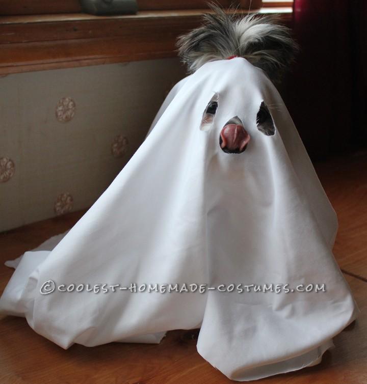 Scary Little ShitzBoo Dog Costume