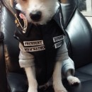 Jax Dog Costume from Sons of Anarchy