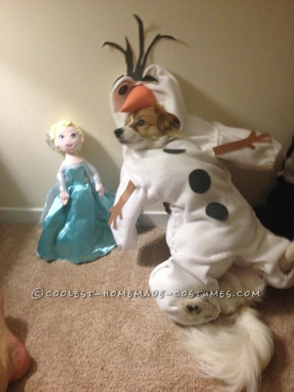 Funny Dog Costume: Mochi  as Olaf from Frozen - 3