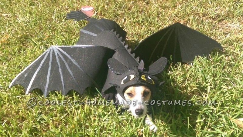 Awesome DIY How to Train Your Dragon Dog costume