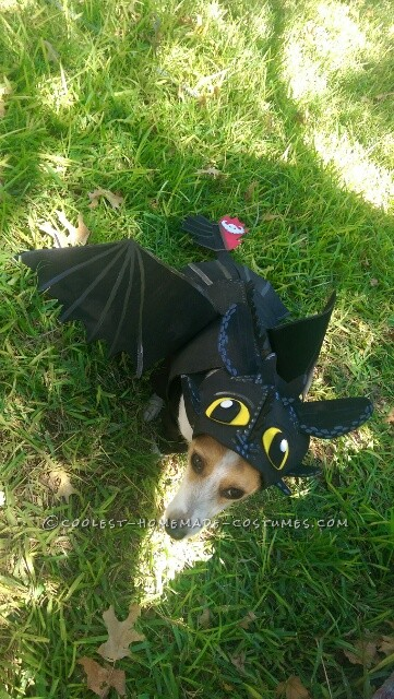 Awesome DIY How to Train Your Dragon Dog costume - 1