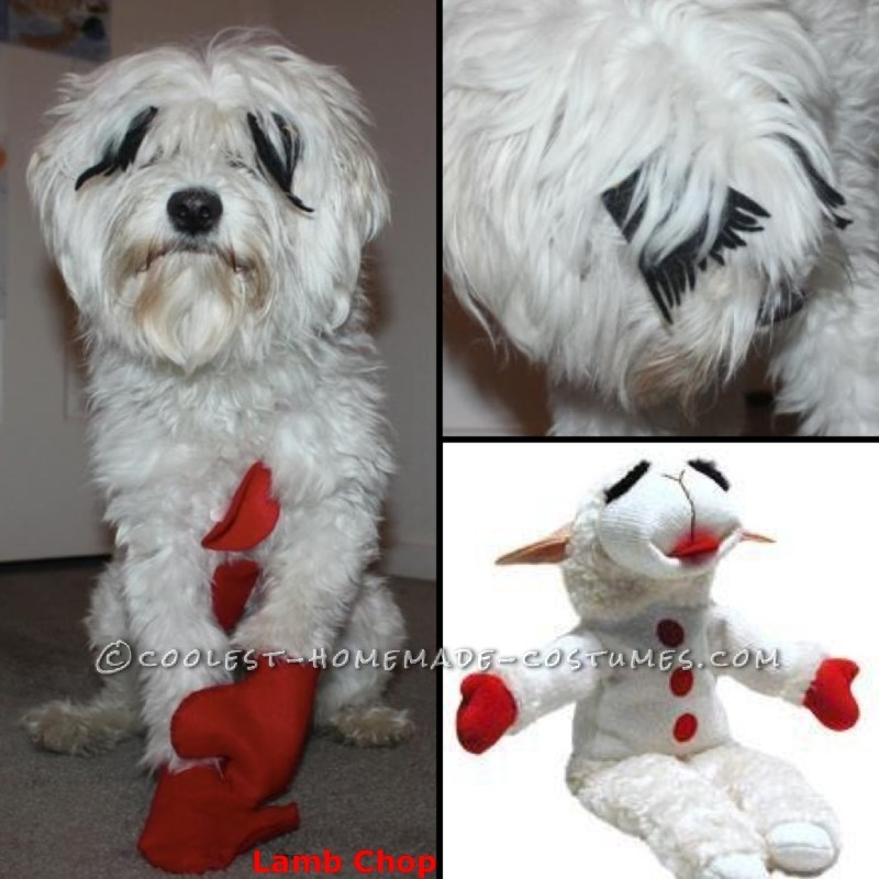 Her in her Lamb Chop costume compared to the actual puppet.