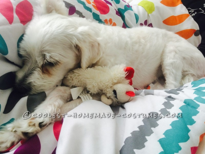 When she first got her toy. Even after time has past she still has Lamb Chop with her.