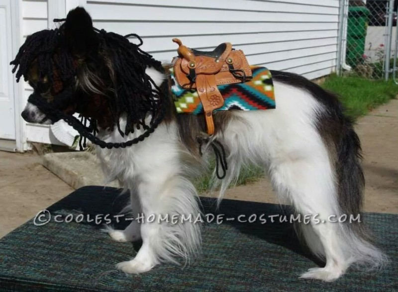 Cutest My Little Pony Costume for a Papillon Dog
