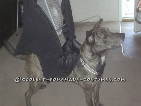 Toothless Dragon Dog Costume