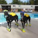 Cool Scuba Dogs