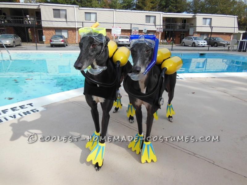 Cool Scuba Dogs - 2