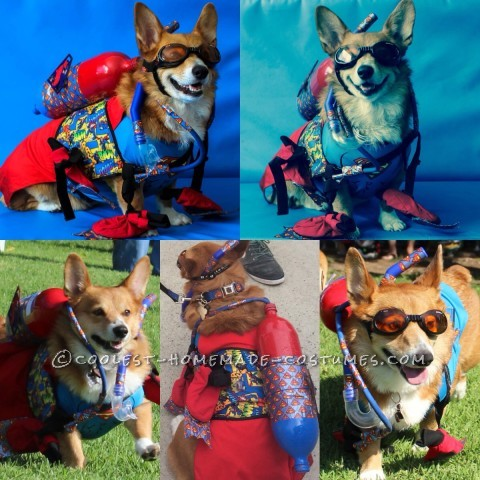 Fun and Easy Scuba Outfit for a Dog