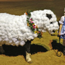 Little Bo Peep and Her Horsey Sheep Costumes