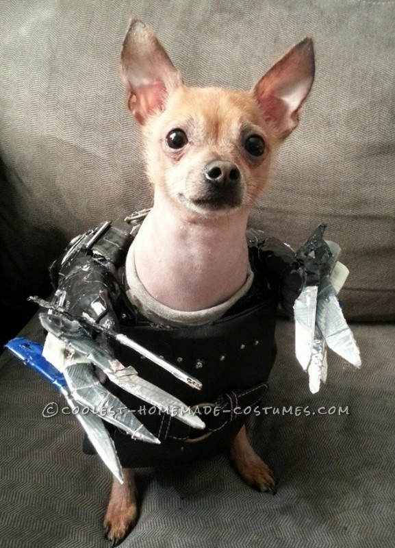 Edward Scissorpaws Costume for a Chihuahua Dog