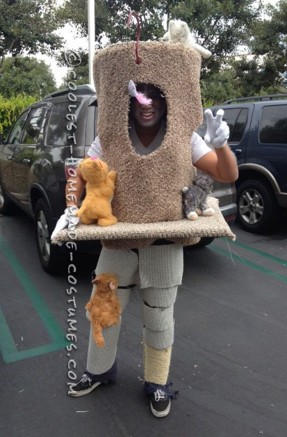 Original Grumpy Cat in his Condo Costume - 2