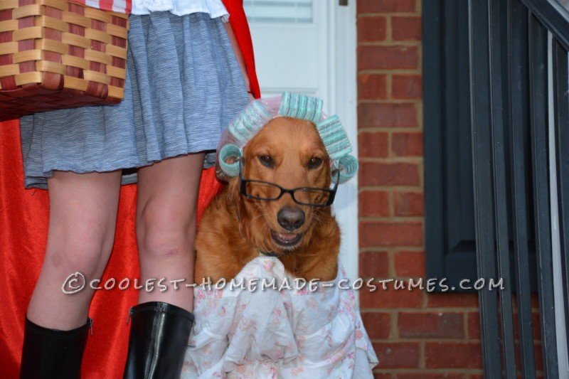 Little Red Riding Hood Child Costume and Grandmother Dog - 1