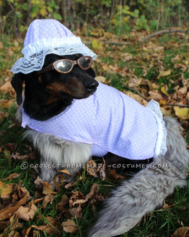 The Big Bad Wolf (as Grandma) Dog Costume