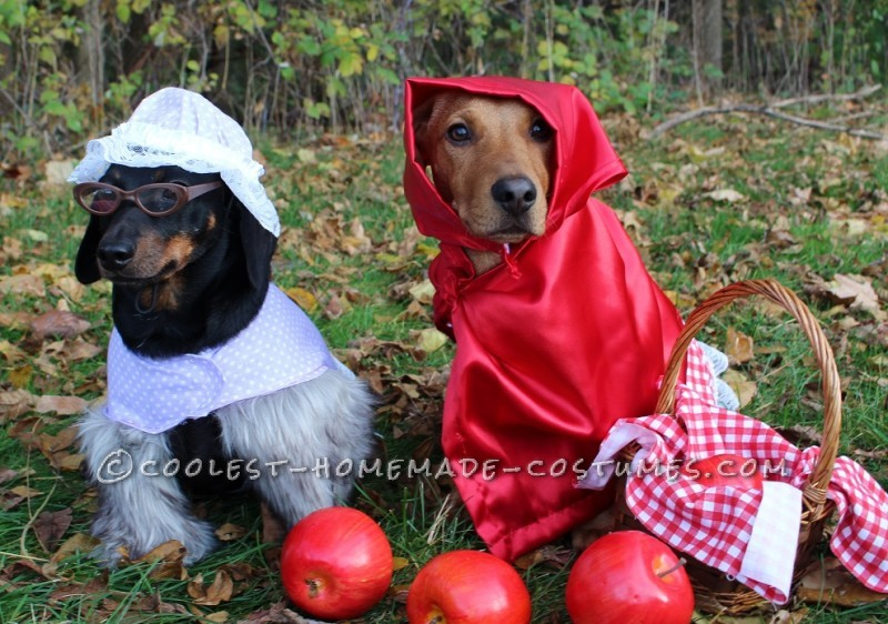 The Big Bad Wolf (as Grandma) Dog Costume
