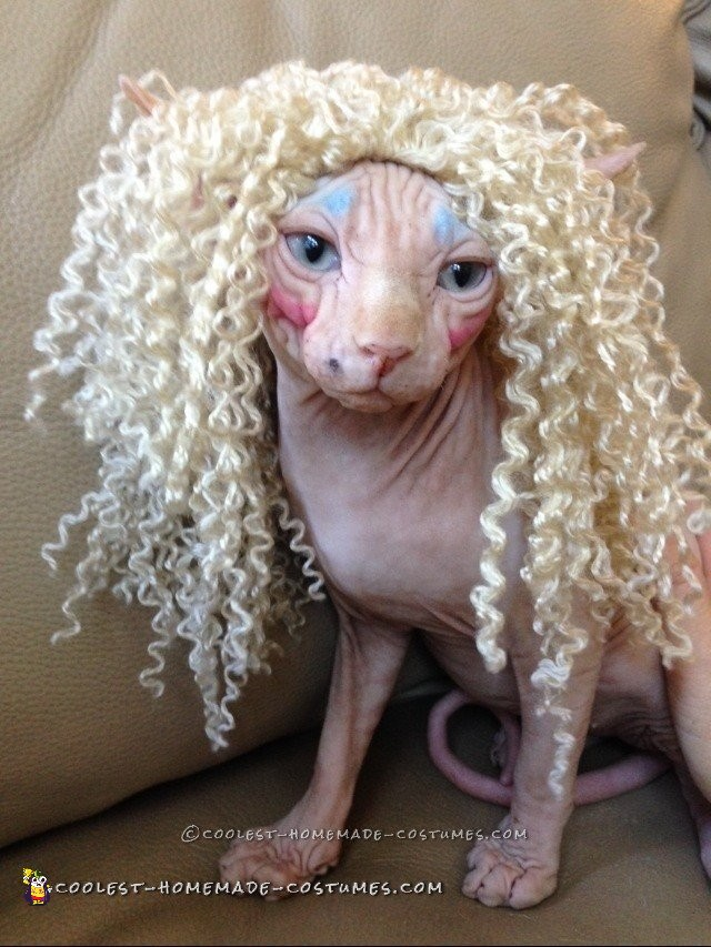 Twisted Sister Cat Costume