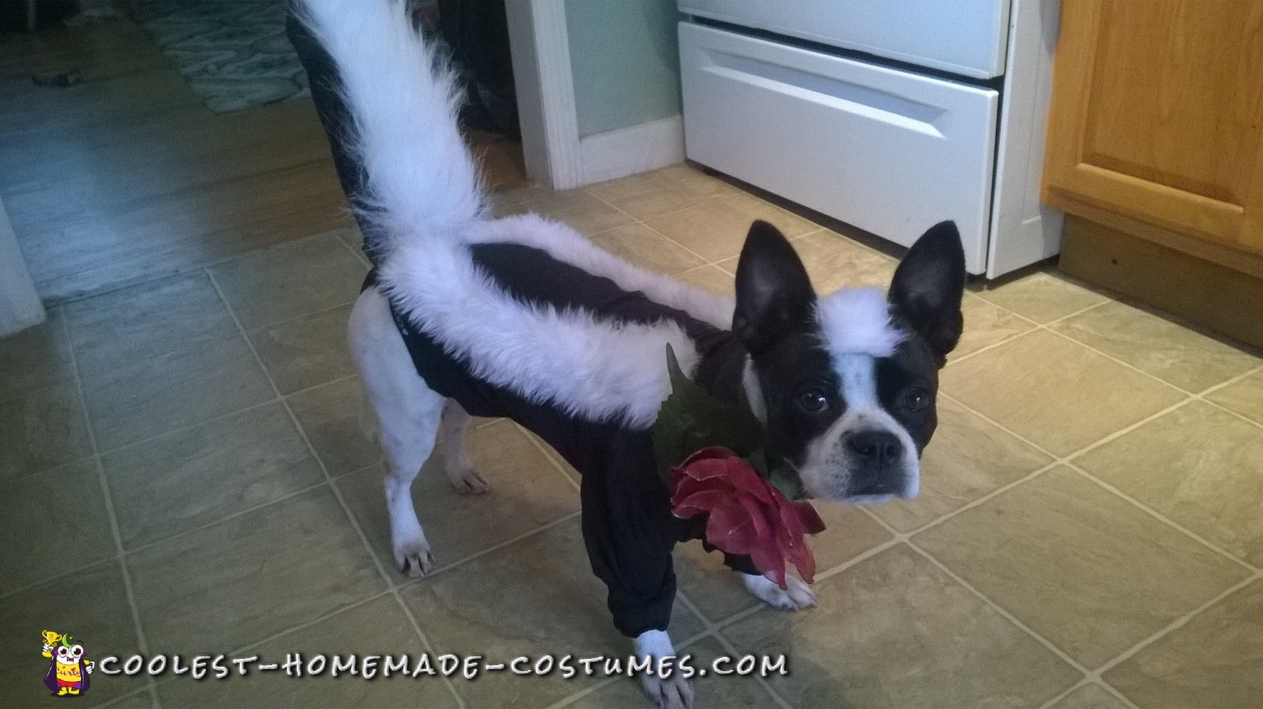 Handmade Flower the Skunk from Bambi Dog Costume