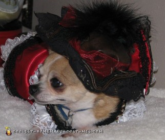 Jack Sparrow and Elizabeth Swann Dog Costumes