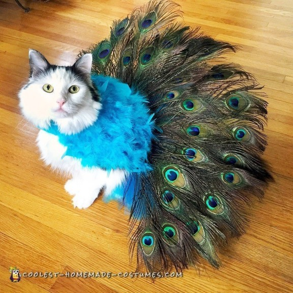 Pretty Peacock Cat Costume - Literally Tells It's Own Tail!