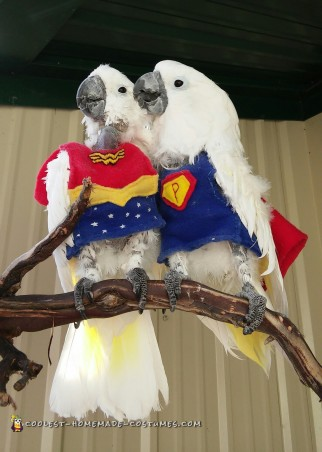 Super Parrot and Wonder Bird Save the Day
