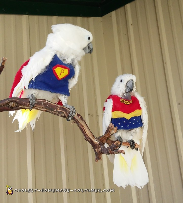 Super Parrot and Wonder Bird Save the Day - 1