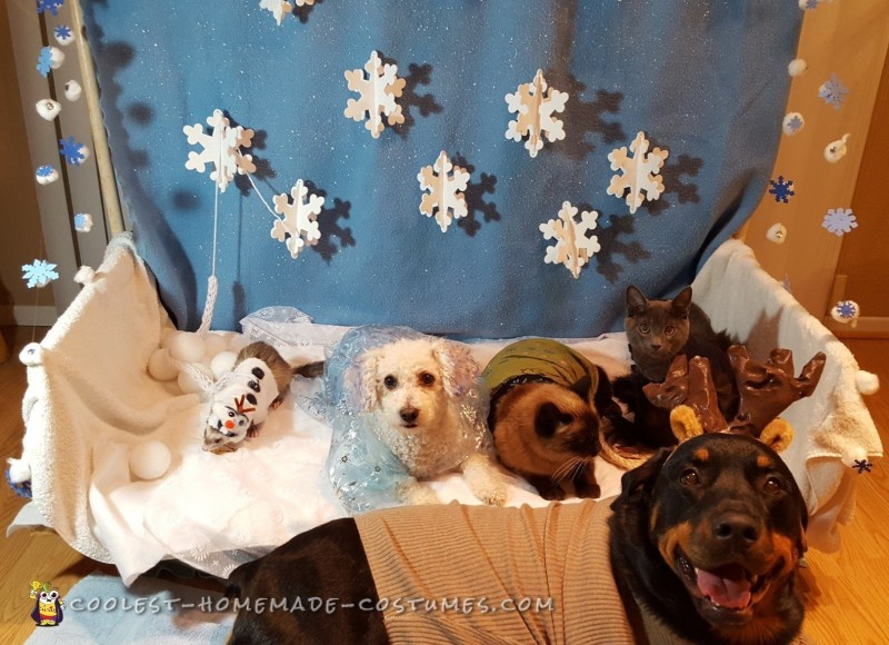 Let it Go Frozen Pet Costumes