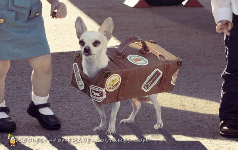 Pan Am Crew Toddler Costumes with Chihuahua