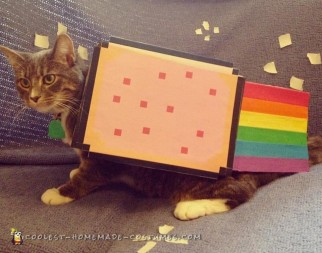 Super Simple Cat Costume - Nyan Cat!