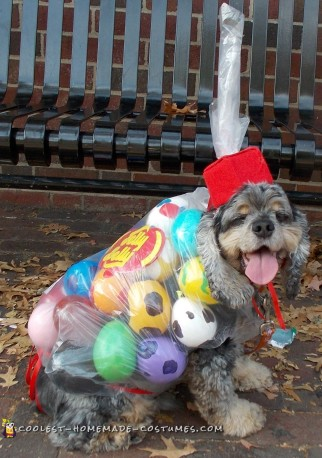 DIY dog costume