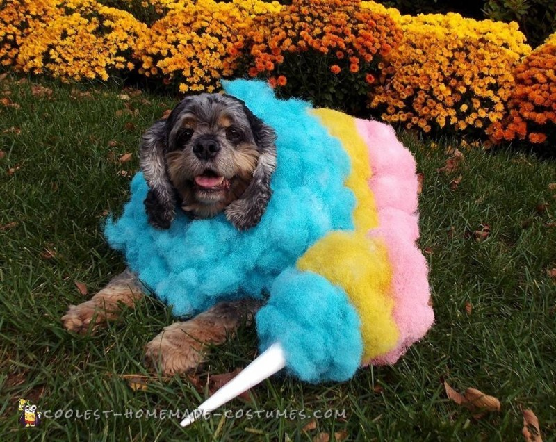 homemade halloween dog costume