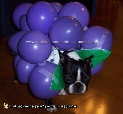 Fruit of the Loom Doggy Style Costume