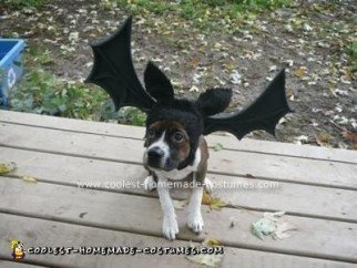 Homemade Bat Dog Costume