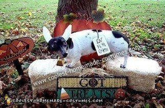 Homemade Cow Costume for a Pet Dog