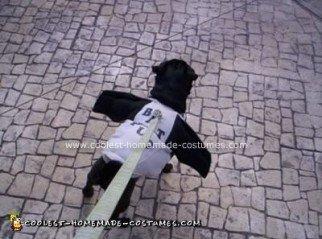 Homemade Dog Costume
