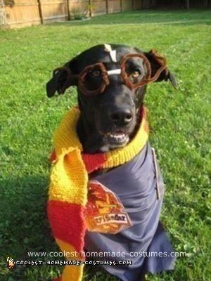 Homemade Harry Potter Pet Costume