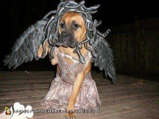 Homemade Medusa Dog Unique Halloween Costume Idea