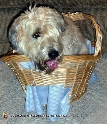 Homemade Toto Dog Costume