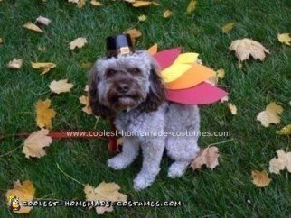 Homemade Turkey Dog Costume