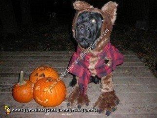 Homemade Werewolf Dog Halloween Costume Idea