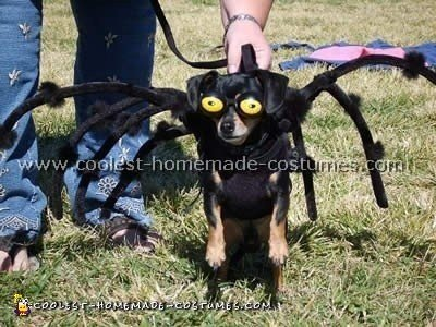 Coolest Dog Halloween Costumes , Photos and How,To Tips