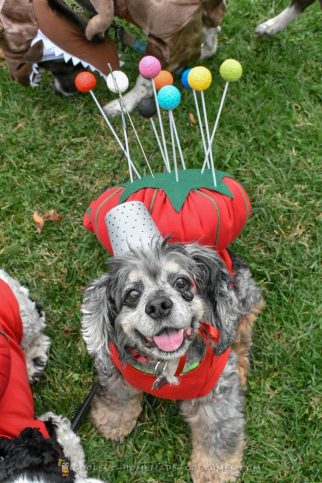 Sew Adorable Pincushion Costume for a pup)