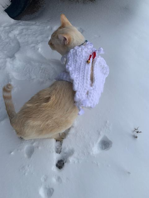 Hand crocheted angel cat